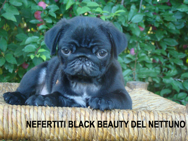 Nefertiti Black Beauty del Nettuno