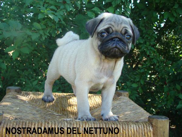Nostradamus del Nettuno